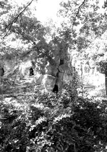 Skov med klipper