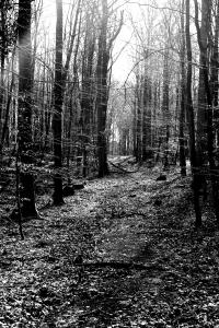 Skoven I
