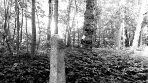 Milepæl i skov