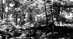 Flod gennem skov